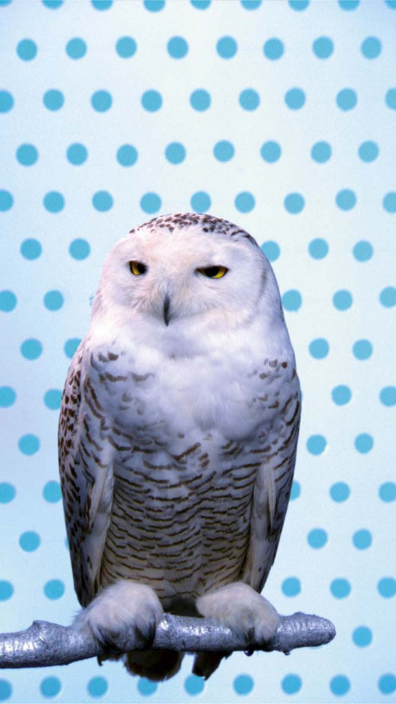 KOOL. Snowy Owl, 2006. Music by Carl Maria von Weber, arranged by Peter Cerone