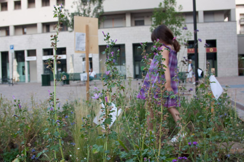 Malva. Spazio Growing Green in Piazza E. Berlinguer, Milano, Luglio 2012 Foto di Francesca Dainotto