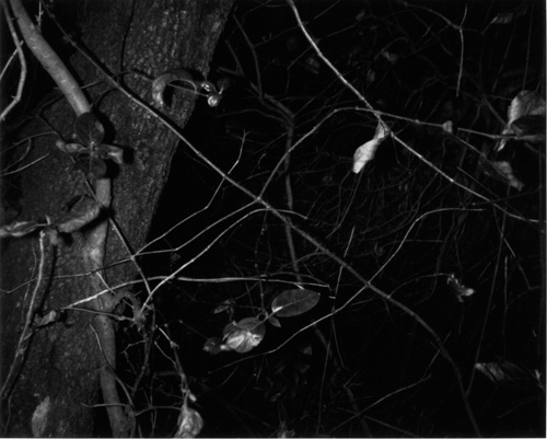 Rodney Graham, Montserrat, 1995, 80 polaroids