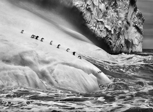 Isole South Sandwich, 2009 © Sebastiao Salgado Amazonas Images