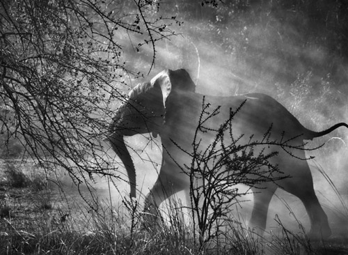 Kafue National Park, Zambia, 2010  © Sabastiao Salgado Amazonas Images