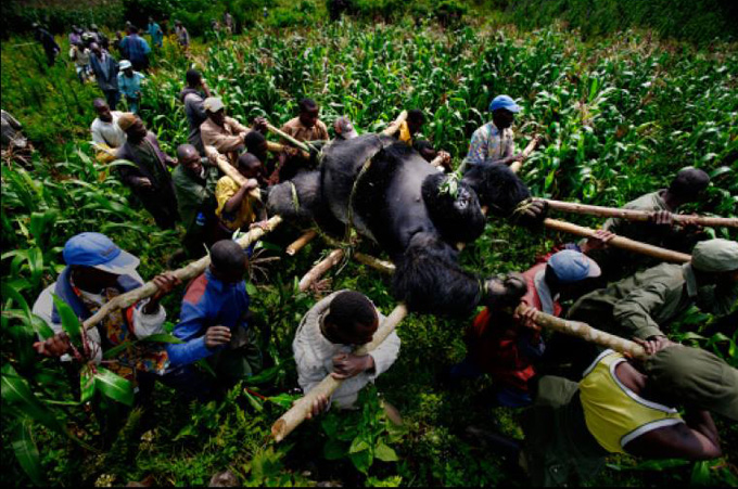 Brent Stirton, Reportage by Getty Images
