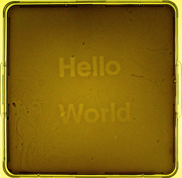 Jeff Tabor, Randy Rettberg, Hello World, biologia sintetica, 2004