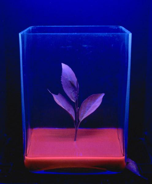 Jun Takita, Conversion d'énérgie, arte biotecnologica