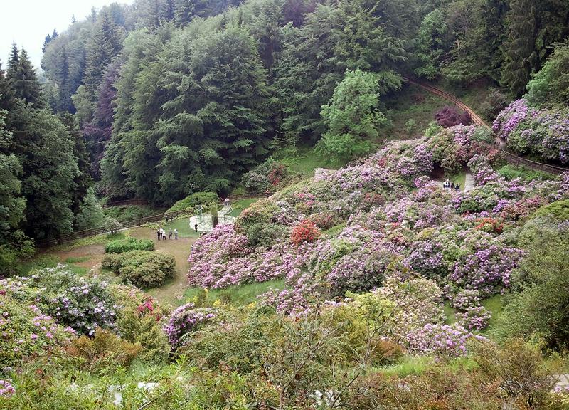 Veduta della Conca dei Rododendri, Oasi Zegna - Foto Francesca Cogoni