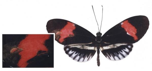 """""""Nature"""" Marta de Menezes, 2000"""