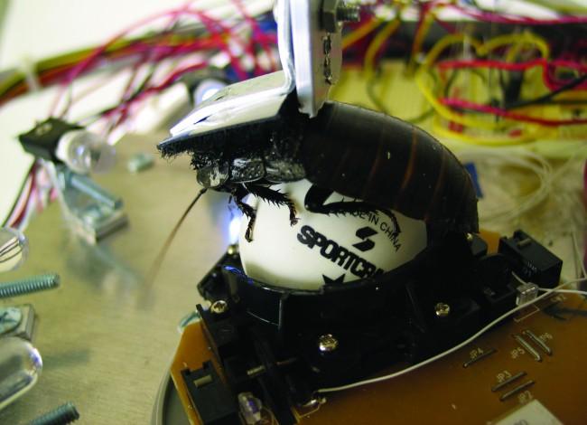 Garnet Hertz, Cockroach Controlled Mobile Robot #2, struttura robotica governata da uno scarafaggio, 2004
