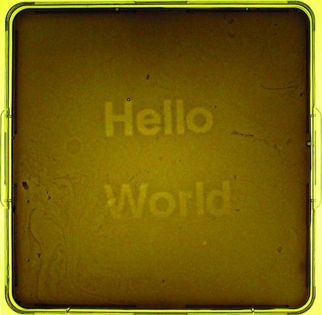 Jeff Tabor, Randy Rettberg, Hello World, biologia sintetica, 2004, biofilm realizzato presso l'Università di Austin (foto: courtesy degli autori).