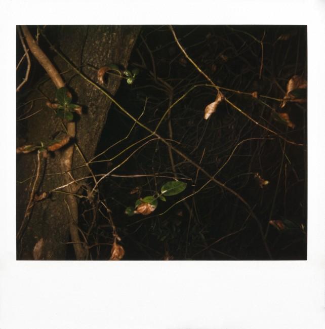 Rodney Graham, Montserrat, 1995 80 Polaroids, 9 x 7.5 cm each (without Polaroid frame) © Tony Coll, Barcelona