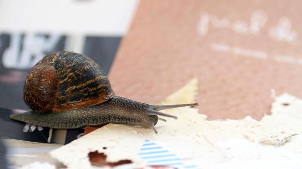 Joan Fontcuberta, Gastropoda, video still. 2013