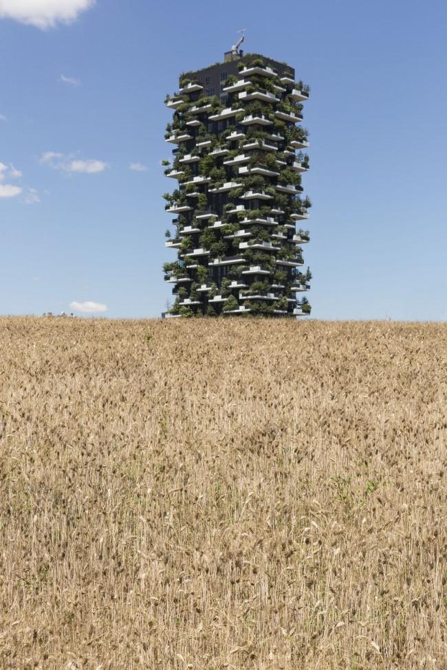 Agnes Denes, Wheatfield, 2015, Porta Nuova Milano, Courtesy Fondazione Nicola Trussardi