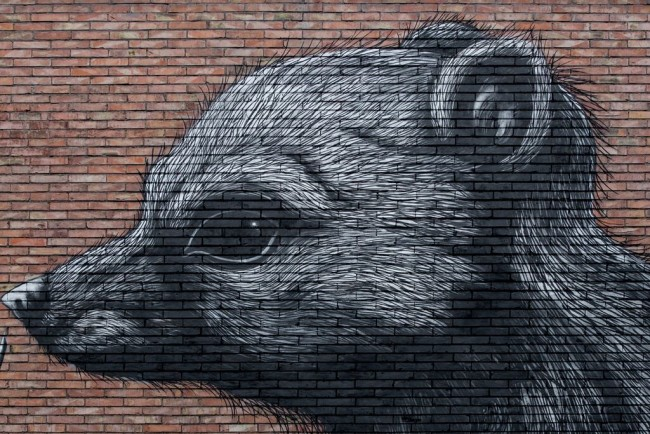 Roa, For Daniza, Roma
