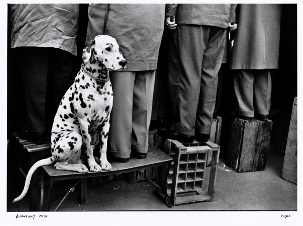 Walter Vogel, Dalmatiner ... Kein Interesse an Fußball, Düsseldorf, 1956  © Walter Vogel