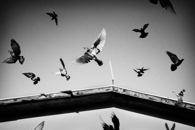 Scott Typaldos – Butterflies (vincitore concorso 2015 pro)