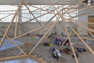 XI Biennale di Lione: volonta' e pulsione sociale in Laura Lima