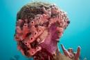 Il museo sottomarino. Le sculture subacquee di Jason deCaires Taylor