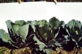 Earthrise. Visioni pre-ecologiche nell'arte italiana (1967-73)