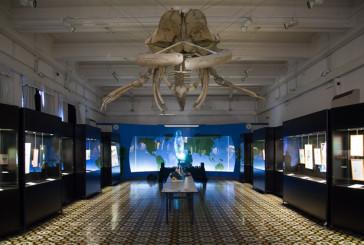 The BEST(iarium) al Museo Civico di Zoologia di Roma